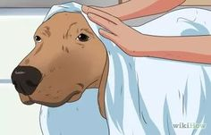 How to Help Your Dog After Giving Birth (with Pictures) - wikiHow
