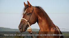 Abraham Lincoln a dit « Je peux nommer un général en 5 minutes, mais un bon cheval est difficile à remplacer ».