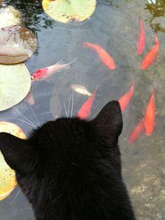 """Black Cat ~ """"friends"""""""