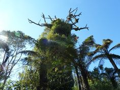 800 year old rata trees at Pukeiti gardens Local Attractions, Zoos, Places Of Interest, Walkway, Road Trips, Botanical Gardens, New Zealand, Places Ive Been, Scenery