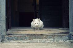Photo by Anatoly Ilynov