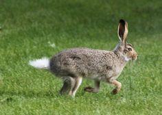 Run Rabbit Run Rabbit Run, Photos, Animals, Animales, Pictures, Animaux, Animal, Cake Smash Pictures, Animais