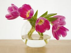 Tulips | I bought some tulips the other day, they have just … | Flickr
