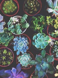 succulents they are so very pretty, I would like a wreath made of them