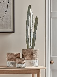 NEW Three Cement Basket Planters - Indoor Plant Pots & Planters - Decorative Home Accessories - Luxury Homeware Indoor Flower Pots, Indoor Plant Pots, Indoor Planters, Potted Plants, Indoor Gardening, Plant Basket, Basket Planters, Rattan Basket, Planter Pots