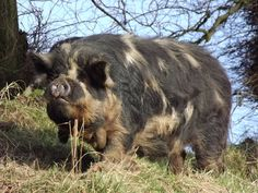 Elvis is alive and well and living on our Scottish Smallholding!