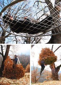Natural playground--Squirrel's nest!!!!!!!!!!!!!!