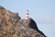 Cape Palliser was named by Captain James Cook, on December 7, 1769 while sailing up the coast he sighted land and named the point Cape Palliser after his good friend Captain Palliser of the Beagle.
