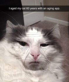 LOL why am I laughing so hard! Funny Shit, Funny Cute, The Funny, Funny Memes, Funny Stuff, Funny Comedy, Haha, Cat Ages, Son Chat