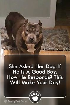 Dogs - She Asked Her Dog If He Is A Good Boy How He Responds This Will Make Your Day! dogs dogvideos pets video pitbulls animals animalvideos via Silly Dogs, Cute Funny Dogs, Funny Dog Memes, Funny Cats And Dogs, Funny Animal Videos, Funny Animal Pictures, Cute Funny Animals, Cute Baby Animals, Funny Kitties