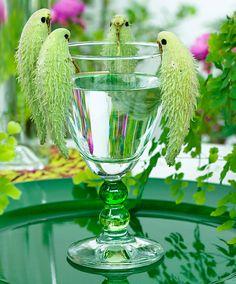 Plante aux perruches