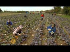 UK activists look to use wasted food - YouTube