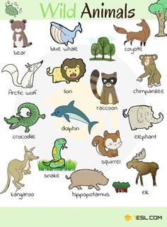 Everybody loves animals – keeping them as pets, seeing them at the zoo or visiting a farm… List of Animals. Learn …