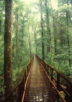 bridge path in nature #forest