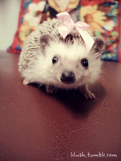 Hedgehogs are cool.