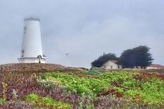 """Fog at Piedras Blancas"" by Nikolyn McDonald Photography is a coastal landscape featuring the light station near San Simeon, California.  A light mist veils the lighthouse and outbuilding that sit on a rise above the ocean. point,plants,flowers,wildflowers,seaside,nautical,history,past,park,wildlife sanctuary,outstanding natural area,national register of historic places,west coast,pacific,scenic,water,nature,building,usa,landmark,america,seascape,shore,seaside,iconic,united states,flag,nikki"