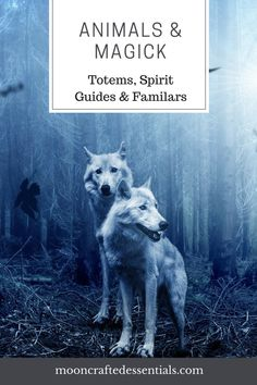 awesome Animals & Magick- Totems, Spirit Animals & Familiars Read More by Butterfly Spirit Animal, Find Your Spirit Animal, Spirit Animal Totem, Animal Spirit Guides, Animal Totems, Animal Meanings, Wiccan Witch, Wicca Witchcraft, Baby Witch