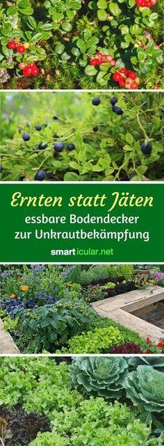 Unser Bauerngarten Sammelsurium Pinterest Bauerngarten - bauerngarten anlegen welche pflanzen