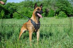 Purchase this Studded Leather Dog Harness for stylish walking of your pet! Y-shaped chest is adorned with silver-like cones for fashion look. Leather Harness, Dog Harness, Dog Leash, Hyperactive Dog, Dog Training Equipment, Dog Muzzle, Belgian Malinois, Cane Corso, Small Breed