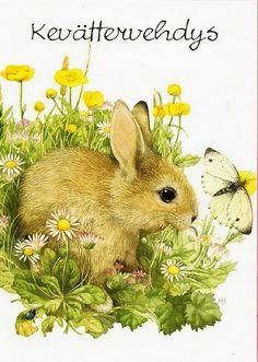 Marjolein Bastin bunny postcard | Flickr - Photo Sharing!