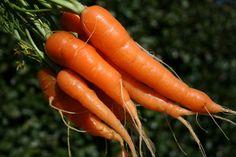 Unique compound in carrots reduces cancer risk