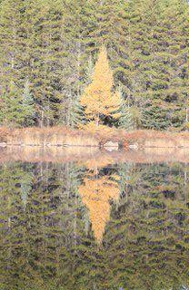 On a calm lake in the fall. Canoe, Wilderness, Fall, Places, Autumn, Fall Season, Lugares