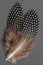 Zambizi Crested Guinea Feathers | Atlantic Salmon Fly Tying Materials | Classic Salmon Fly Tying Materials