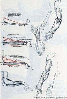 """The Art of Alberto Lolli* from the book """"Struttura Uomo"""" """"Gottfried Bammes """"Die gestalt des menchen"""" или """"Образ человека. Arm Drawing, Human Anatomy Drawing, Body Drawing, Drawing Skills, Life Drawing, Drawing Techniques, Arm Anatomy, Anatomy Study, Anatomy Art"""