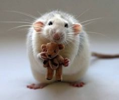 Rat with a teddy bear