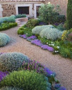 """Garden Design Magazine: """"What plants work in hot, dry spots? This colorful combo does: pink rock rose, hot purple dianthus,…"""""""