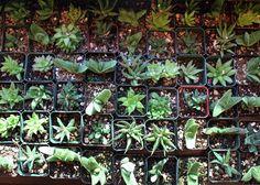 Top Ten Low Light Terrarium Plants