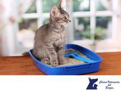 ¿Sabías que? LA MEJOR CLÍNICA VETERINARIA DE MÉXICO. Originalmente las cajas de arena para gatos estaban rellenas con arena, pero en 1948 fue reemplazada por arcilla para que fuera más absorbente, modalidad que permanece hasta nuestros días. En Clínica Veterinaria del Bosque te invitamos a visitar nuestro sitio web www.veterinariadelbosque.com, para conocer todos los servicios que ofrecemos.  #veterinaria