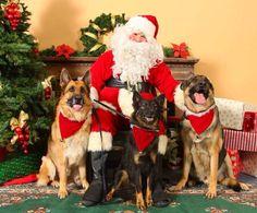 Feliz Navidad a todos nuestros seguidores. Dios todopoderoso los bendiga y que esté hoy y siempre en sus hogares!  #PetsWorldMagazine #RevistaDeMascotas #Panama #Navidad #FelizNavidad #MerryChristmas