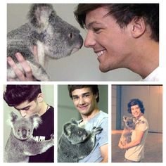 oone direction with koalas in Australia! Harry Styles 2011, Hot Boys, Justine, One Direction, My Friend, Australia, My Favorite Things, Cute, Movies