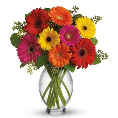 Gerbera - September flower!!!  I like the buds in the arrangement, and the way the stems cross in the round vase