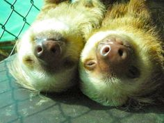 and most of all, happy. | An Inside Look At What It's Like To Be Surrounded By Sloths