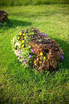 Straw Bale Gardening... Looks super easy!  Water and fertilize everyday for a few weeks then plant