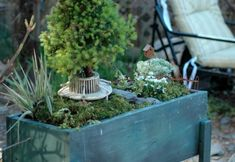 Using Plants in Your Home Part 5 :: Fairy Gardens, They Aren't Just for Little Old Ladies