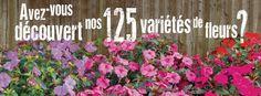 Nouvelle campagne 2015, avec un focus sur la saison horticole. Nos producteurs vous attendent! - New ad campaign! The 2015 gardening season is underway at our public markets! #mpm #market #flower #plants #fleurs #plants #plantes Public, Rural Area, Plants, Flowers