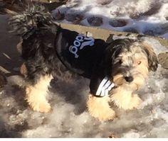 Rockin that Adidog hoodie