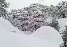 Cedars of Lebanon - a heavenly place.
