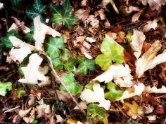 Autumn leaves on the ground 22