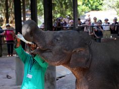 Day Tours from Colombo,Sri Lanka Tours to Kandy from Colombo,Sri Lanka Trips to Pinnawala Elephant Orphanage,Sri Lanka Tours to Peradeniya Botanical Garden Kandi, Day Tours, Botanical Gardens, Sri Lanka, Trips, Elephant, Animals, Viajes, Animales