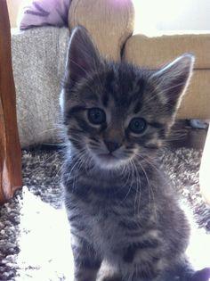 She looks like the kitty I found a few weeks ago :0)