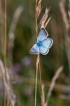 Onet Butterfly - Challenge your mind! Butterfly Games, Blue Butterfly, Beautiful Bugs, Beautiful Butterflies, Types Of Butterflies, Butterfly Pictures, Insect Art, Nature Pictures, My Animal