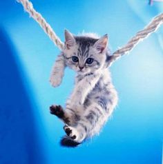 Cute Little Cat Hanging on rope