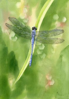 This giclee print catches a blue dragonfly on a daylily leaf and beautiful wet watercolor background.It will be printed on Arches Hotpress watercolor paper, backed with matboard and sealed in a clearbag.