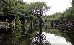 A Amazônia possui uma reserva de água subterrânea com volume estimado em mais de 160 trilhões de metros cúbicos, de acordo com Francisco de Assis Matos de Abreu, professor da Universidade Federal do Pará (UFPA), durante a 66ª Reunião Anual da Sociedade Brasileira para o Progresso da Ciência (SBPC), que terminou no dia 27 de julho, no campus da Universidade Federal do Acre (UFAC), em Rio Branco.