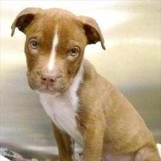 Michigan Humane Society (Dart)
