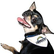 San Diego Chargers Pet Collar Bandana #Football #NFL #NFLDogProducts #NFLPetProducts #DogProducts #PetProducts #SanDiegoChargers #SanDiegoChargersDogs #SanDiegoChargersPets #Chargers #Animals #Dogs #Pets #AdorabullBulldogs #PawsativeParents